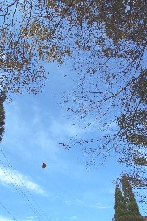 訪れ 秋 一葉 の